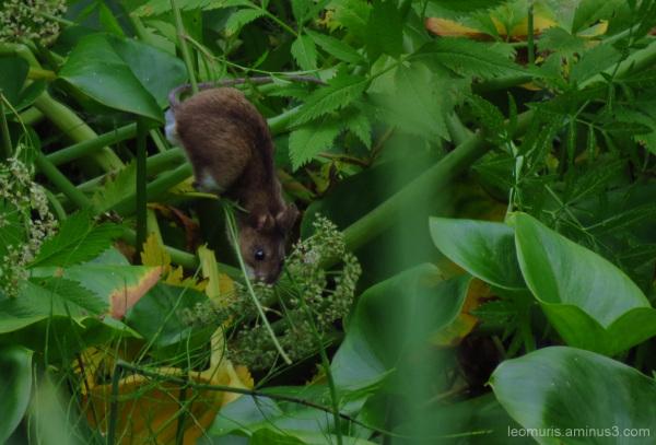 Hiiri -The mouse