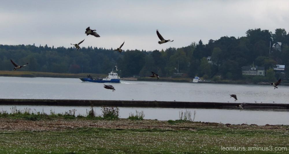 Laiva ja linnut - Ship and birds