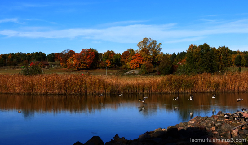 Autumnal lanscspe