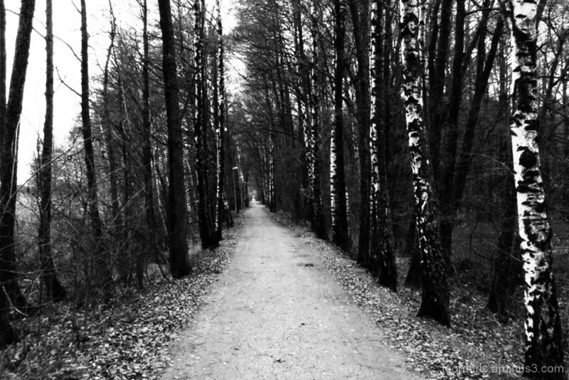 Puita - Trees.