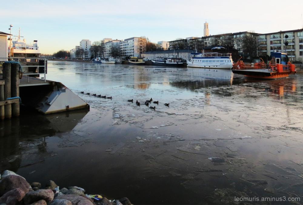 Ferry and mallards