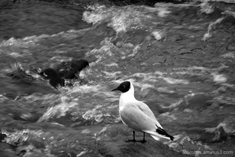 B&W bird