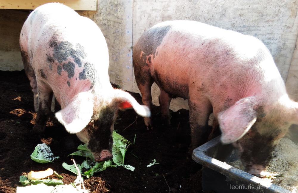 Two porks