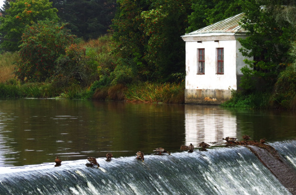 Ducks and a dam