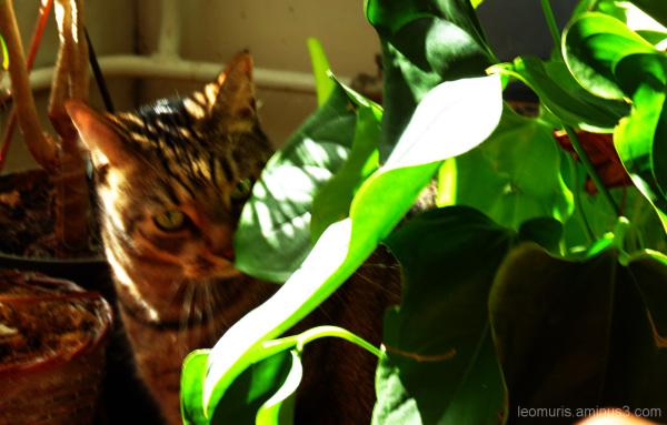 Cat boy Kaapo