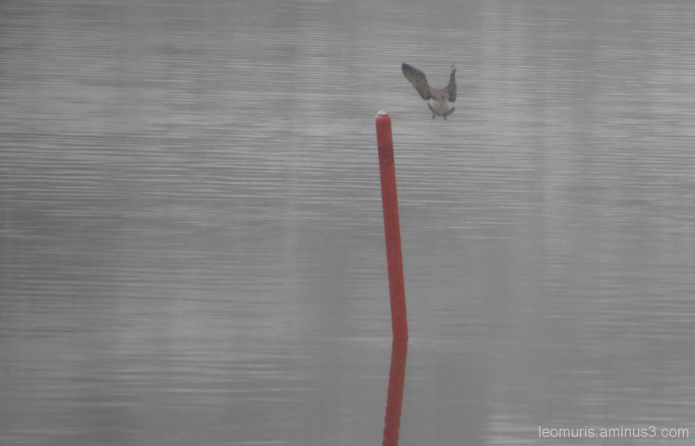 Seagul and pole