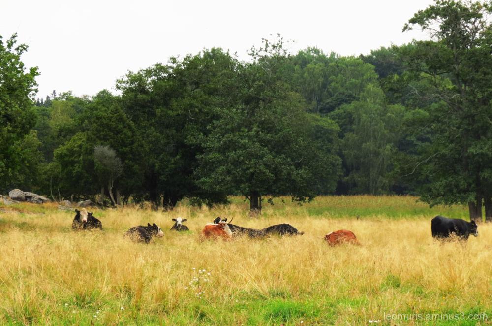 Cattle pasture.