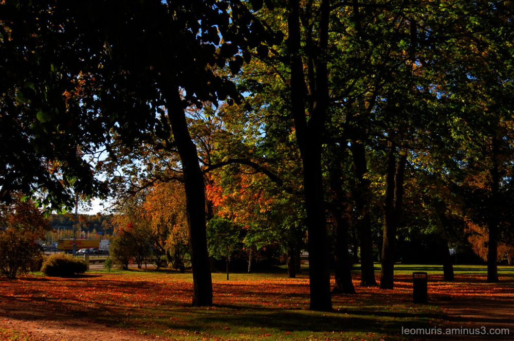 Park and leaves