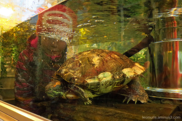 The turtle and reflection