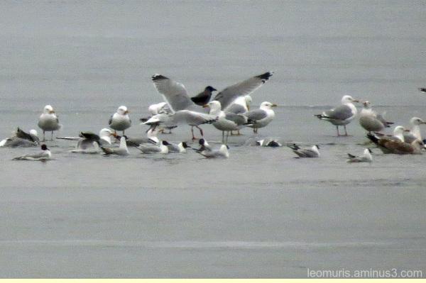 Birds on the ice.