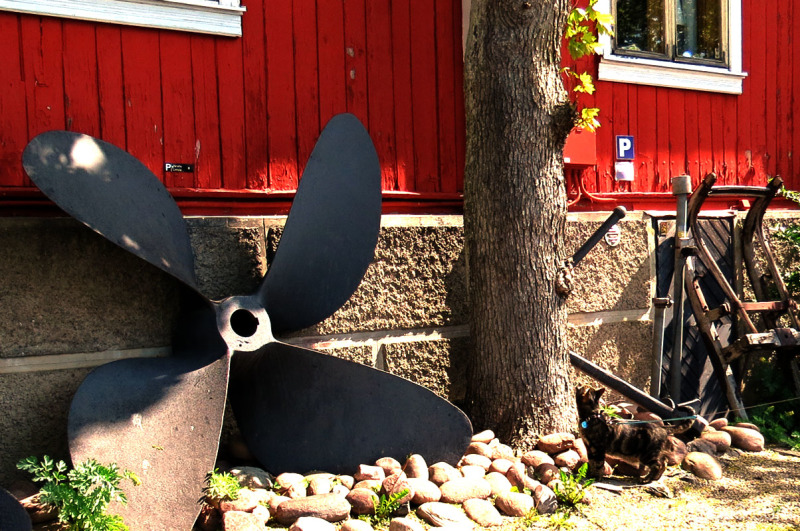 cat and propeller
