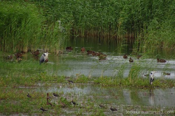 Birds in the reeds.