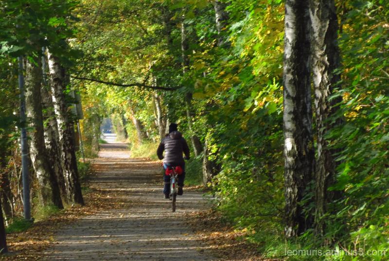 path. autumn, bicyclist, shadows, sunny,