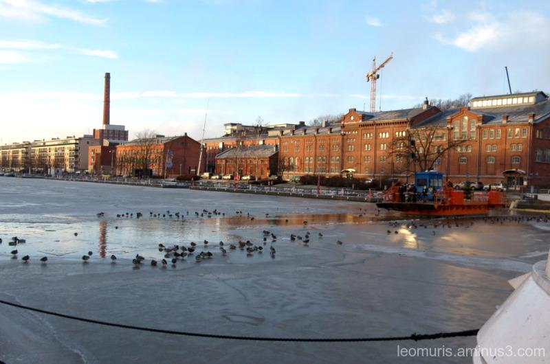 Föri and ducks