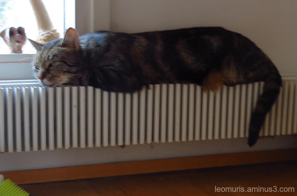 Levi, radiator