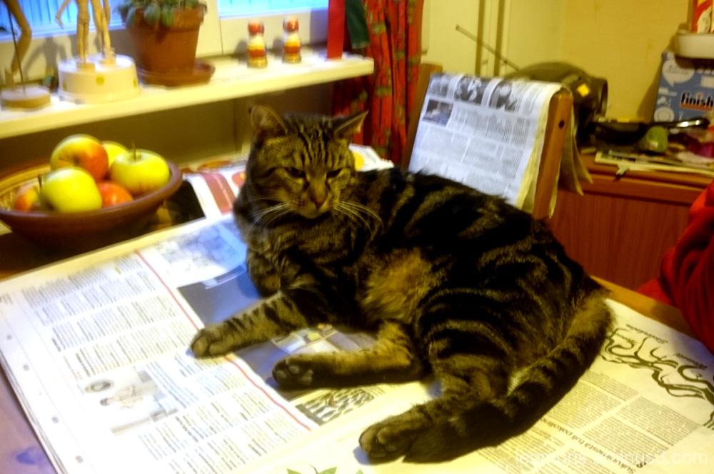 Leevi is reading newspaper