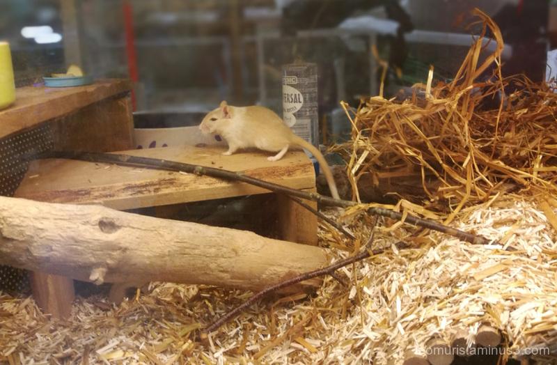 Littke mouse
