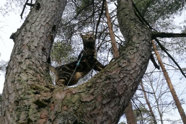 Leeivi in the tree