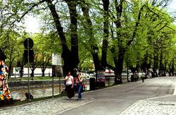 summery street