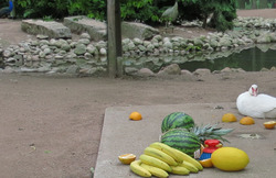 bird and fruits