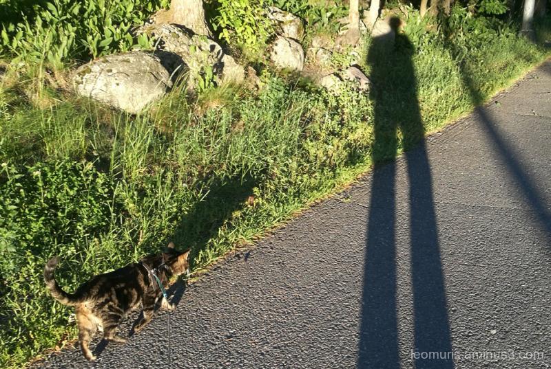 Leevi and shadow