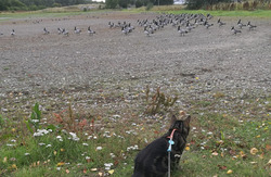 Leevi and birds
