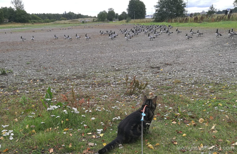 Leevi and birds
