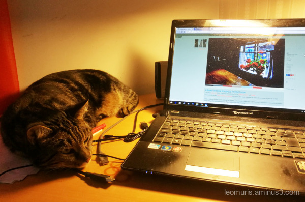 Leevi and computer