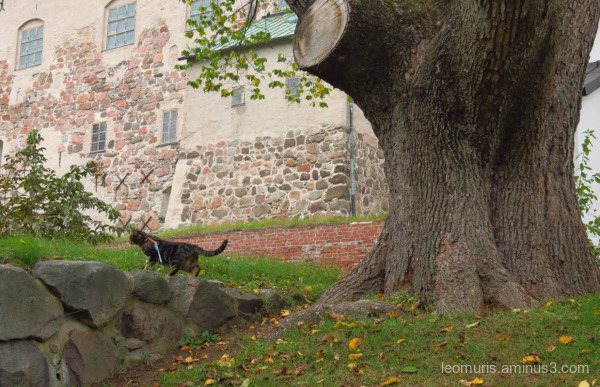 Leevi and castle