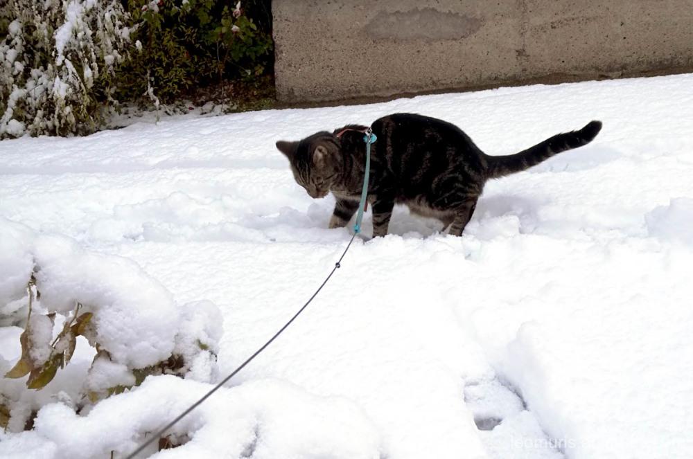 Leevi in snow