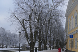 Winter view