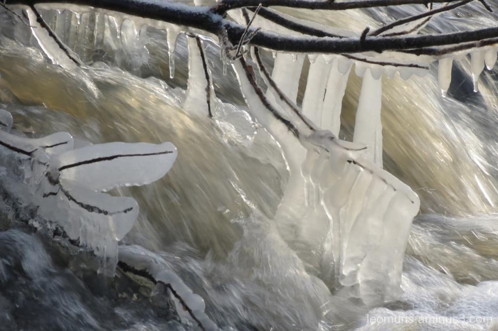 icy braches