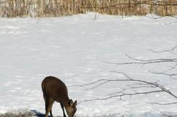 One deer