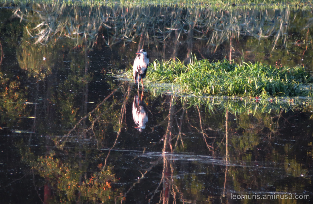 heron in the sunny morning