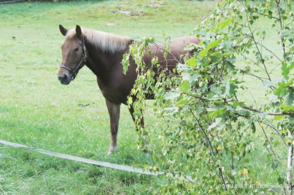Tke horse