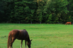 two horses in the pasture