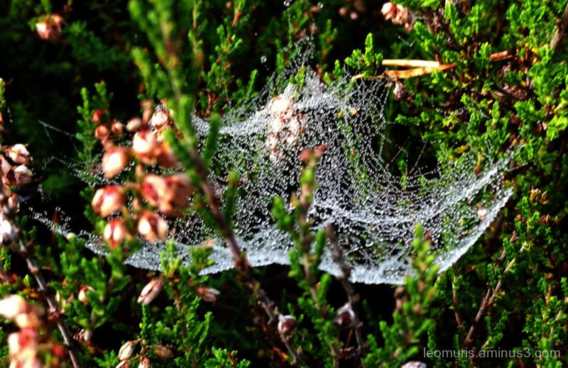 drops in the net