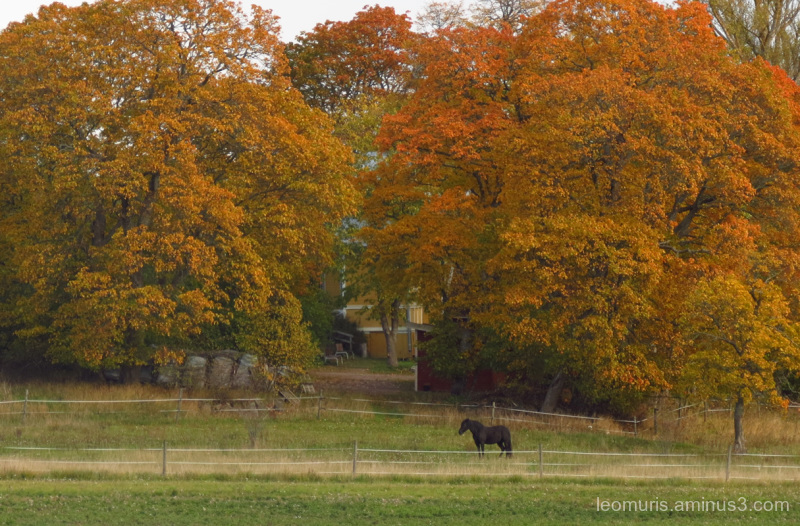 horse and autumnal colors