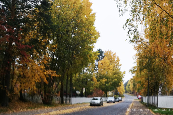 Street iun autumn