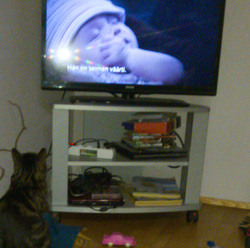 Leevi is wathcing tv