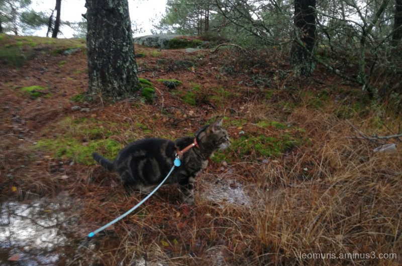 Leevi in forest