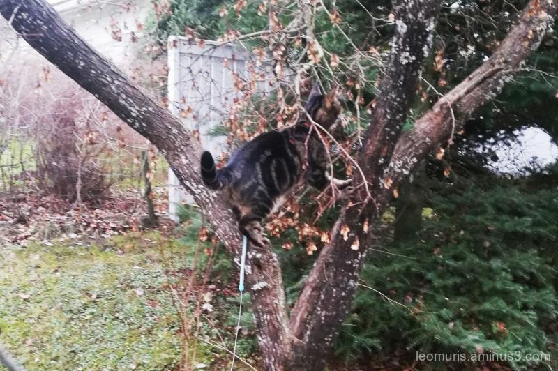 Leevi in tree