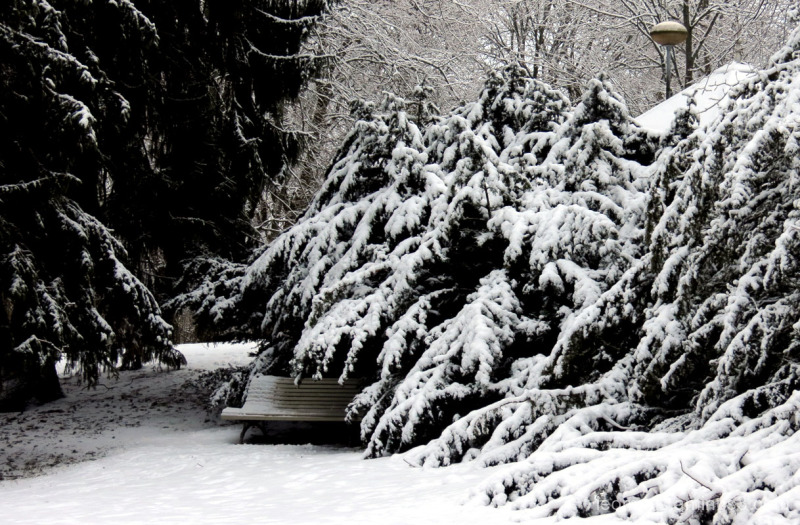 snow, spruce, bench, twilight, calm, turk