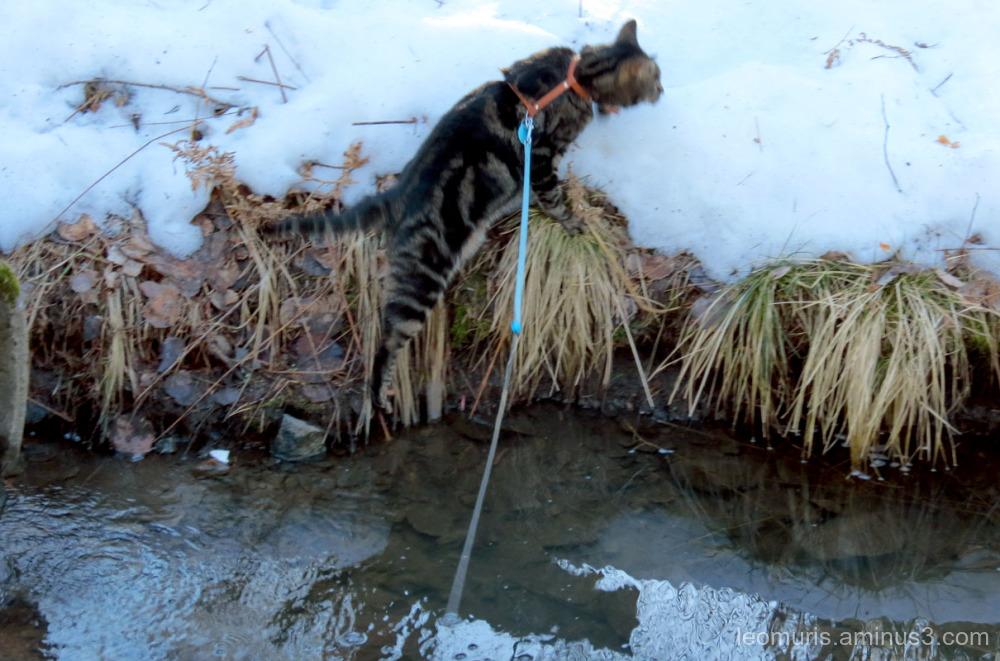 Leevi almost in creek
