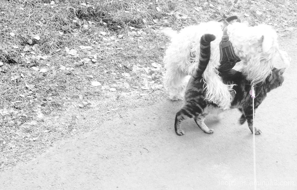 Leevi and dog