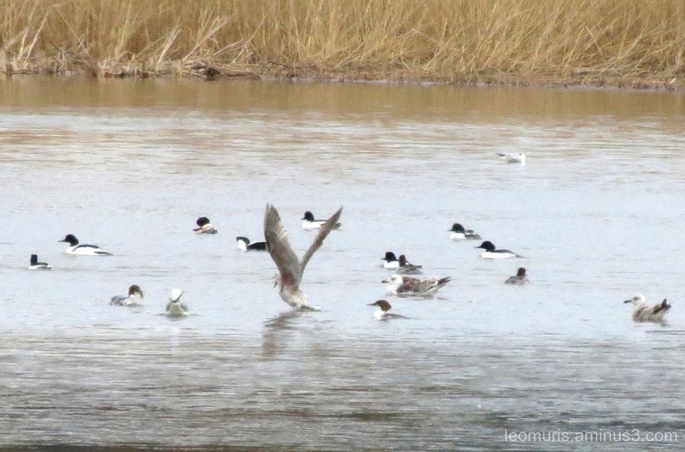 birds, many birds