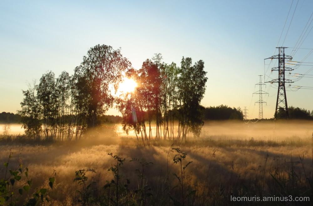 Sunny morning
