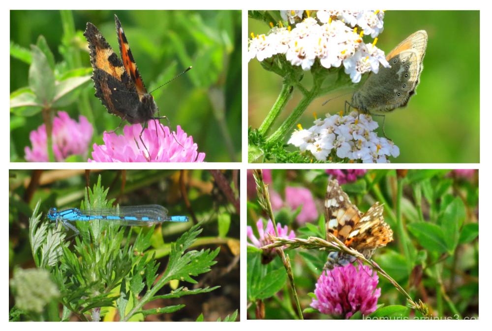 butterfly in grass
