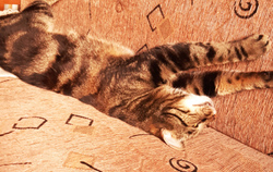 My cat Leevi