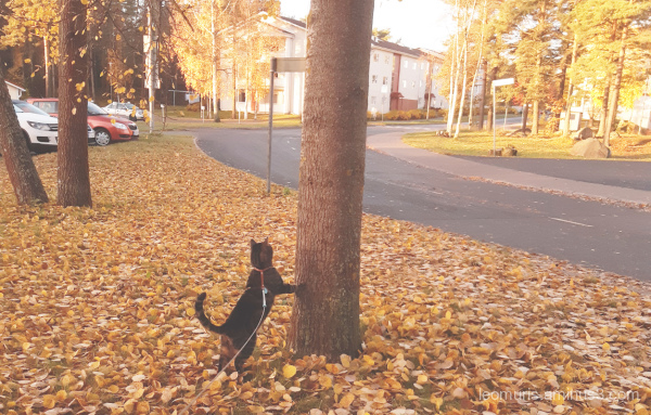 Leevi and leaves